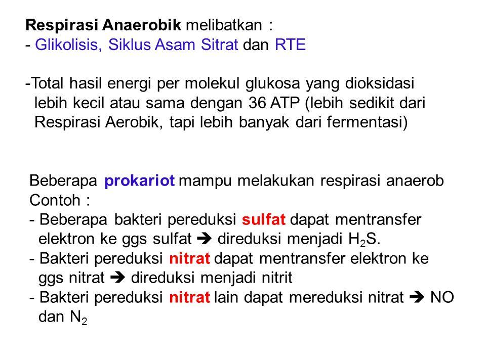 Respirasi Anaerobik melibatkan : - Glikolisis, Siklus Asam Sitrat dan RTE -Total hasil energi per molekul glukosa yang dioksidasi lebih kecil atau sam