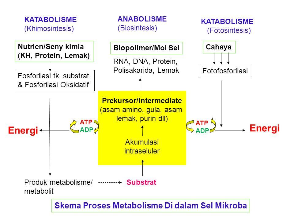 Nutrien/Seny kimia (KH, Protein, Lemak) KATABOLISME (Khimosintesis) ANABOLISME (Biosintesis) KATABOLISME (Fotosintesis) Cahaya Biopolimer/Mol Sel Fosf