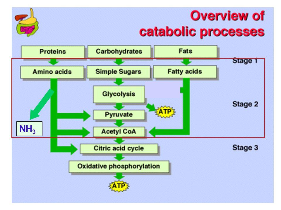 I.PROSES BIOKIMIA PENGHASIL ENERGI (KATABOLISME)  1.