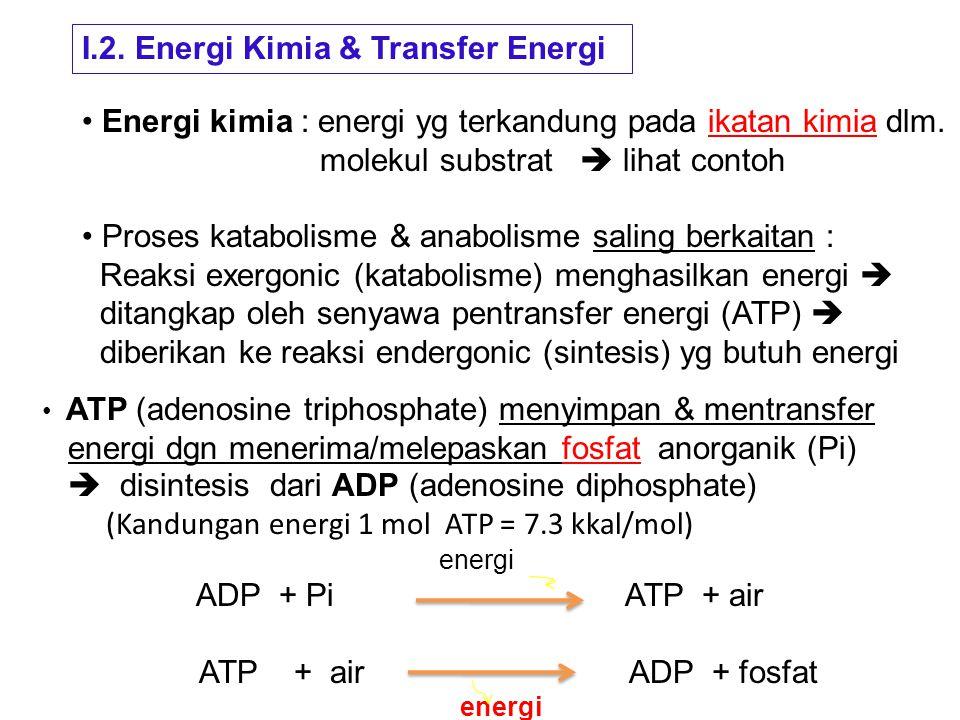 Ikatan kimia yang mempunyai energi tinggi digambarkan Dengan garis gelombang (~), terbentuk dengan cara oksidasi Contoh ikatan kimia berenergi tinggi : Asetil fosfat O CH 3 – C ~ P Asetil Koenzim A O (Acetyl-CoA) CH 3 – C ~ S – CoA Asetat anhidrid O O CH 3 – C ~ O ~ C - CH 3