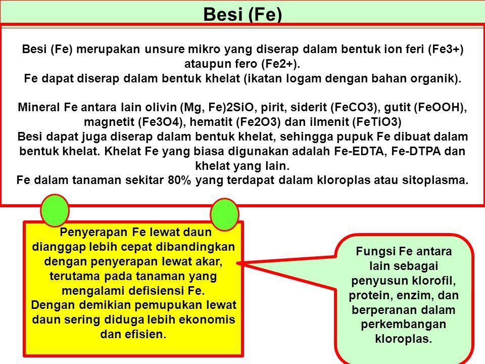 Besi (Fe) Besi (Fe) merupakan unsure mikro yang diserap dalam bentuk ion feri (Fe3+) ataupun fero (Fe2+). Fe dapat diserap dalam bentuk khelat (ikatan