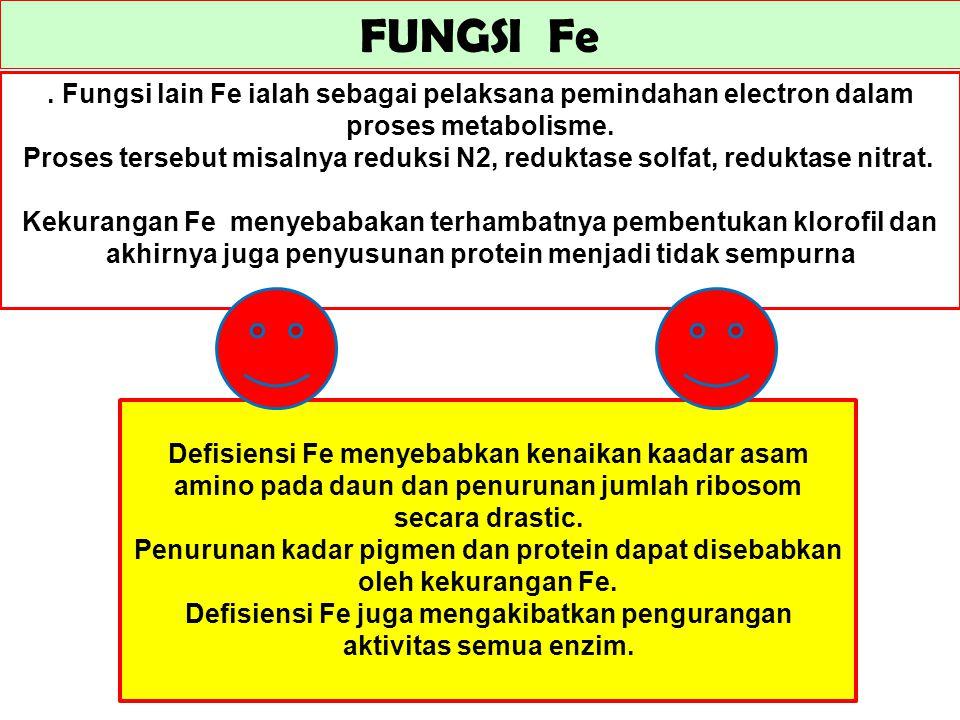 FUNGSI Fe. Fungsi lain Fe ialah sebagai pelaksana pemindahan electron dalam proses metabolisme. Proses tersebut misalnya reduksi N2, reduktase solfat,