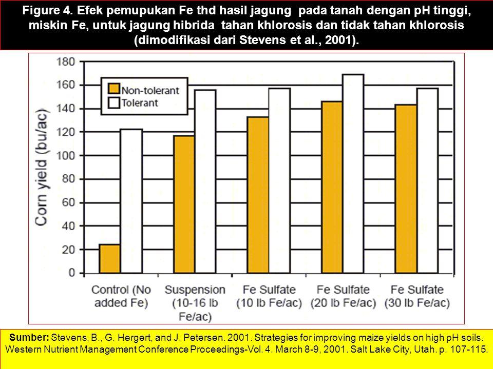 Figure 4. Efek pemupukan Fe thd hasil jagung pada tanah dengan pH tinggi, miskin Fe, untuk jagung hibrida tahan khlorosis dan tidak tahan khlorosis (d