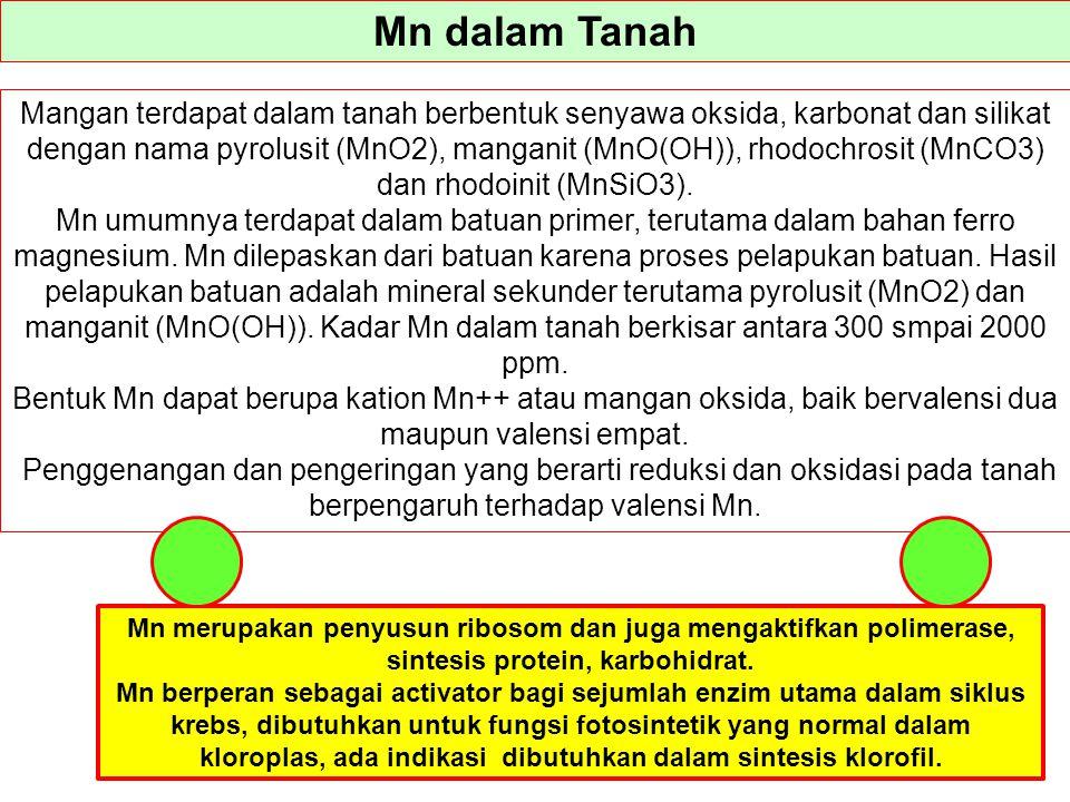 Mn dalam Tanah Mangan terdapat dalam tanah berbentuk senyawa oksida, karbonat dan silikat dengan nama pyrolusit (MnO2), manganit (MnO(OH)), rhodochros