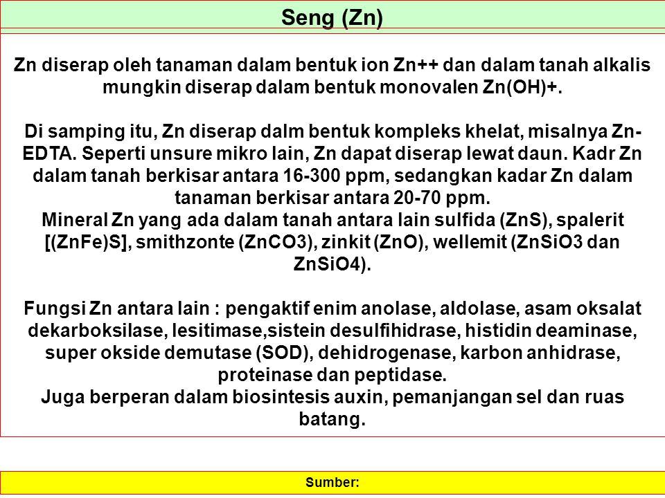 Seng (Zn) Zn diserap oleh tanaman dalam bentuk ion Zn++ dan dalam tanah alkalis mungkin diserap dalam bentuk monovalen Zn(OH)+. Di samping itu, Zn dis
