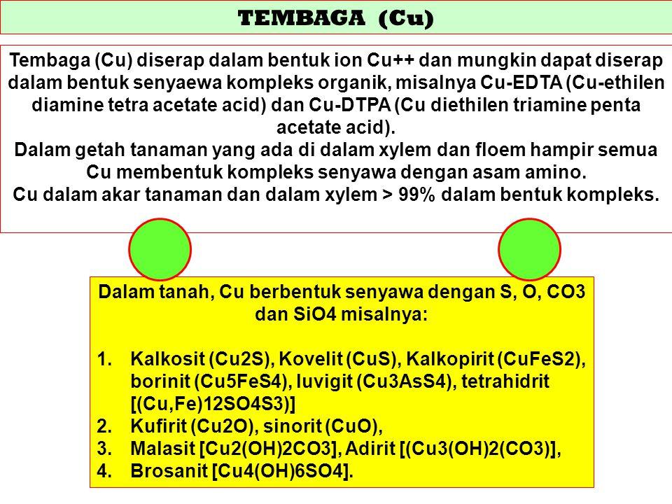 TEMBAGA (Cu) Tembaga (Cu) diserap dalam bentuk ion Cu++ dan mungkin dapat diserap dalam bentuk senyaewa kompleks organik, misalnya Cu-EDTA (Cu-ethilen