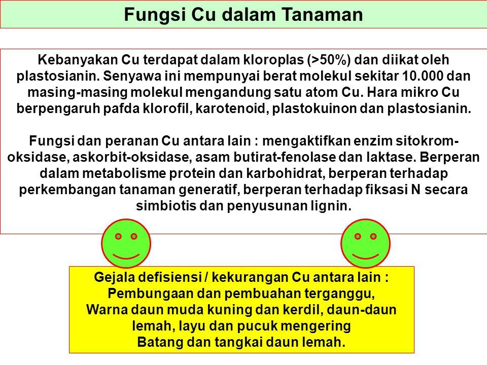 Fungsi Cu dalam Tanaman Kebanyakan Cu terdapat dalam kloroplas (>50%) dan diikat oleh plastosianin. Senyawa ini mempunyai berat molekul sekitar 10.000