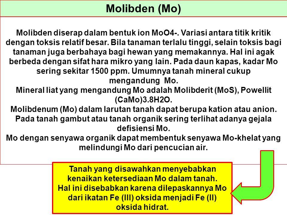 Molibden (Mo) Molibden diserap dalam bentuk ion MoO4-. Variasi antara titik kritik dengan toksis relatif besar. Bila tanaman terlalu tinggi, selain to