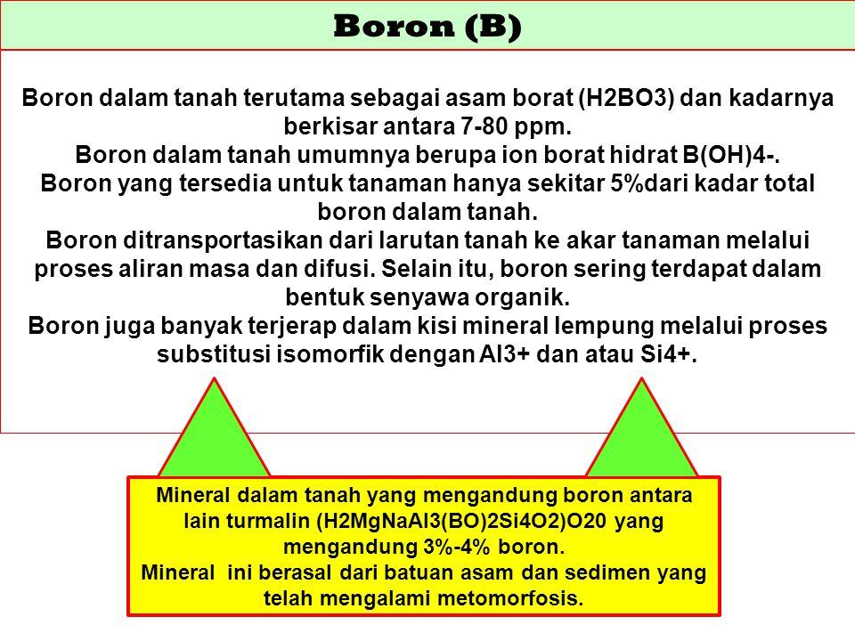 Boron (B) Boron dalam tanah terutama sebagai asam borat (H2BO3) dan kadarnya berkisar antara 7-80 ppm. Boron dalam tanah umumnya berupa ion borat hidr