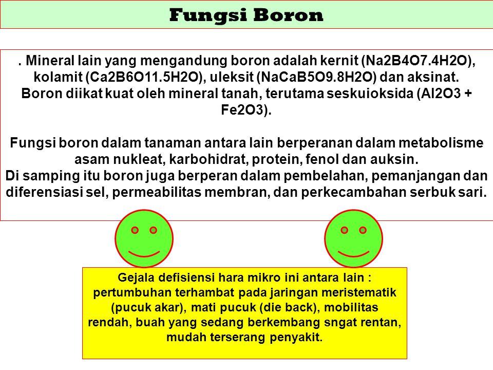 Fungsi Boron. Mineral lain yang mengandung boron adalah kernit (Na2B4O7.4H2O), kolamit (Ca2B6O11.5H2O), uleksit (NaCaB5O9.8H2O) dan aksinat. Boron dii
