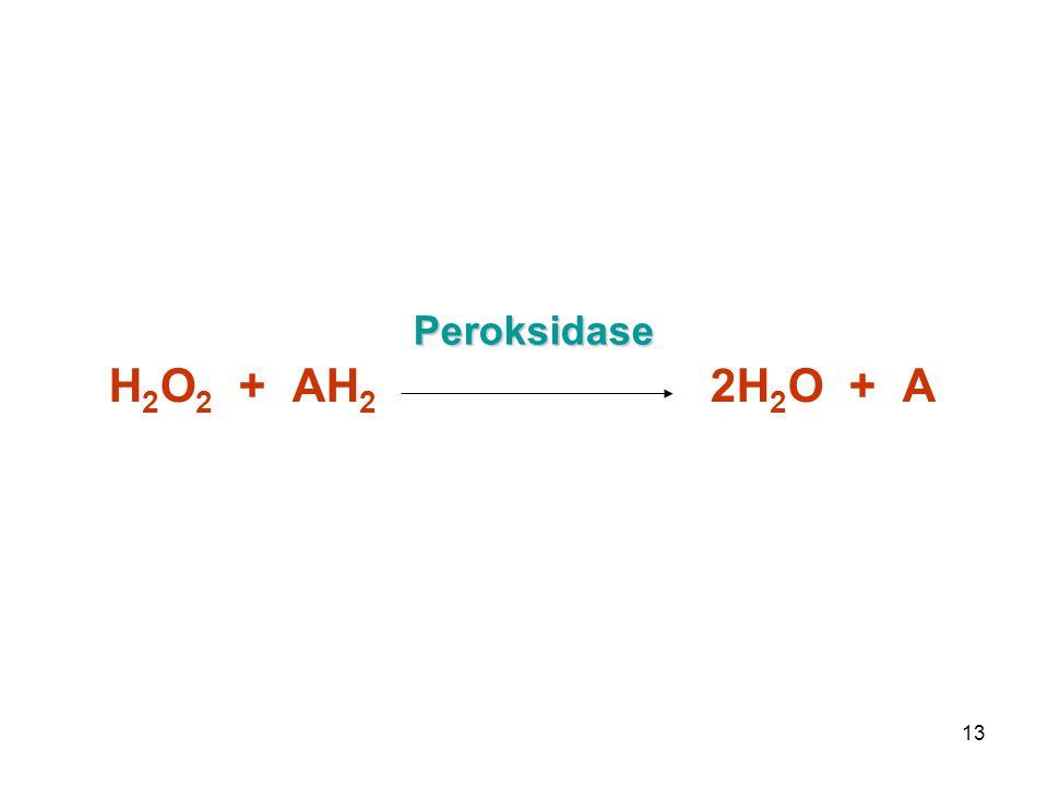 13 Peroksidase H 2 O 2 + AH 2 2H 2 O + A