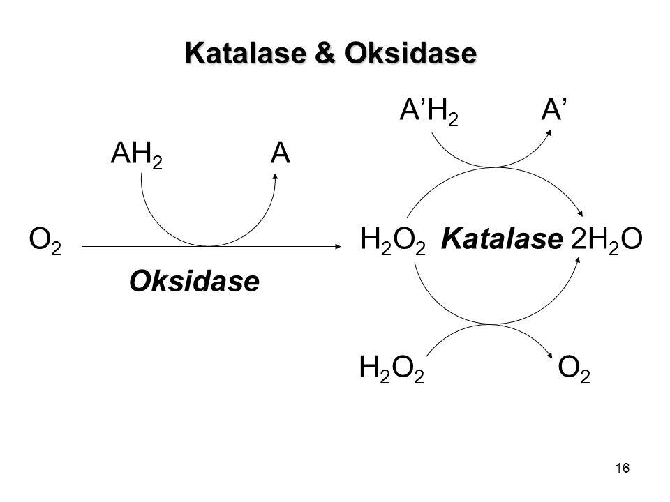 16 Katalase & Oksidase A'H 2 A' AH 2 A O 2 H 2 O 2 Katalase 2H 2 O Oksidase H 2 O 2 O 2