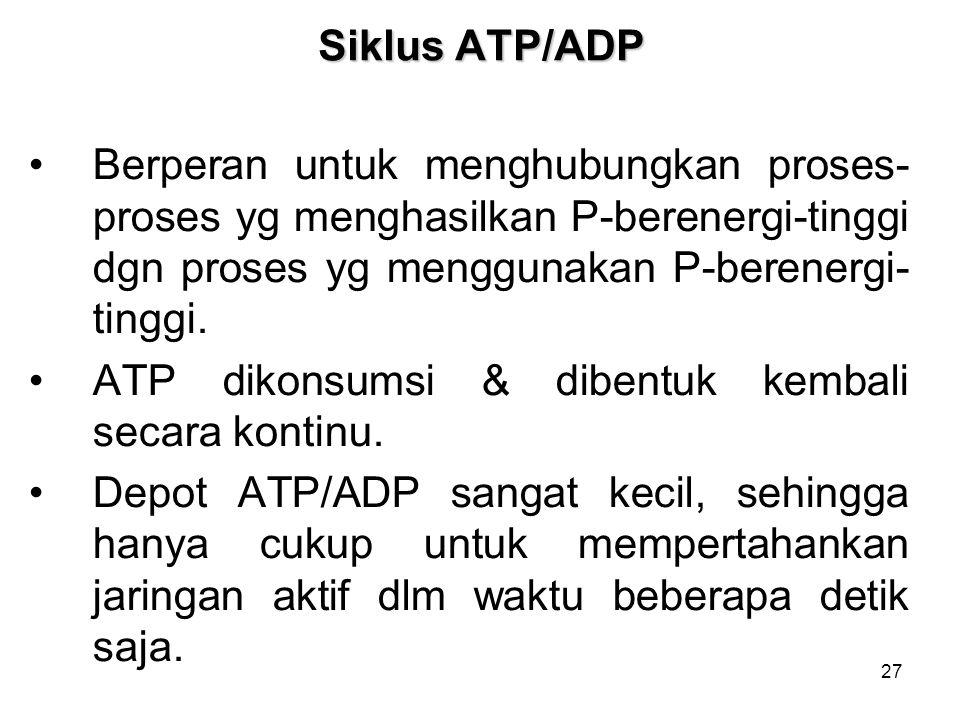 27 Siklus ATP/ADP Berperan untuk menghubungkan proses- proses yg menghasilkan P-berenergi-tinggi dgn proses yg menggunakan P-berenergi- tinggi. ATP di