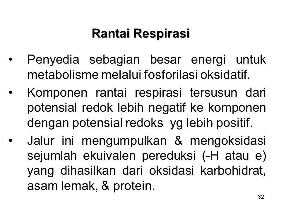 32 Rantai Respirasi Penyedia sebagian besar energi untuk metabolisme melalui fosforilasi oksidatif. Komponen rantai respirasi tersusun dari potensial