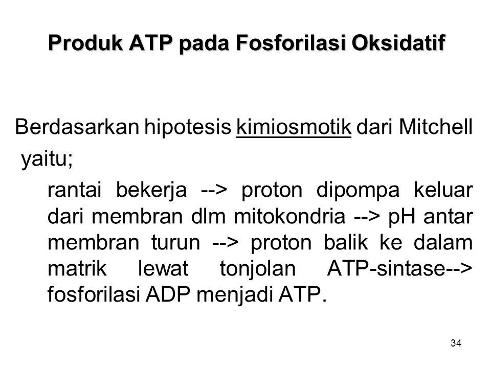 34 Produk ATP pada Fosforilasi Oksidatif Berdasarkan hipotesis kimiosmotik dari Mitchell yaitu; rantai bekerja --> proton dipompa keluar dari membran dlm mitokondria --> pH antar membran turun --> proton balik ke dalam matrik lewat tonjolan ATP-sintase--> fosforilasi ADP menjadi ATP.