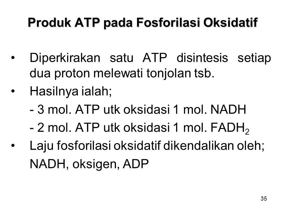 35 Produk ATP pada Fosforilasi Oksidatif Diperkirakan satu ATP disintesis setiap dua proton melewati tonjolan tsb.