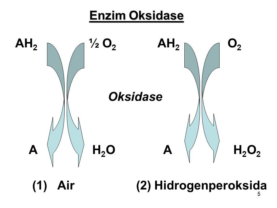 5 Enzim Oksidase AH 2 ½ O 2 AH 2 O 2 Oksidase A H 2 O A H 2 O 2 (1) Air (2) Hidrogenperoksida