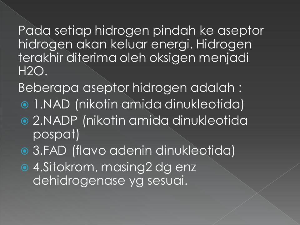 Pada setiap hidrogen pindah ke aseptor hidrogen akan keluar energi. Hidrogen terakhir diterima oleh oksigen menjadi H2O. Beberapa aseptor hidrogen ada