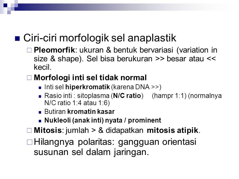 Ciri-ciri morfologik sel anaplastik  Pleomorfik: ukuran & bentuk bervariasi (variation in size & shape). Sel bisa berukuran >> besar atau << kecil. 