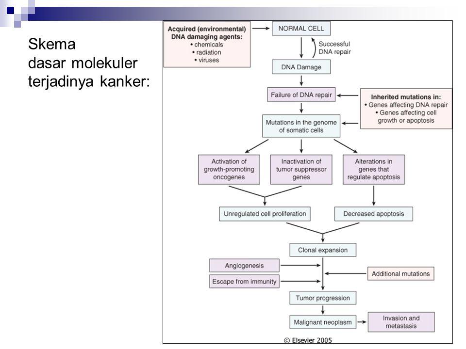 Skema dasar molekuler terjadinya kanker: