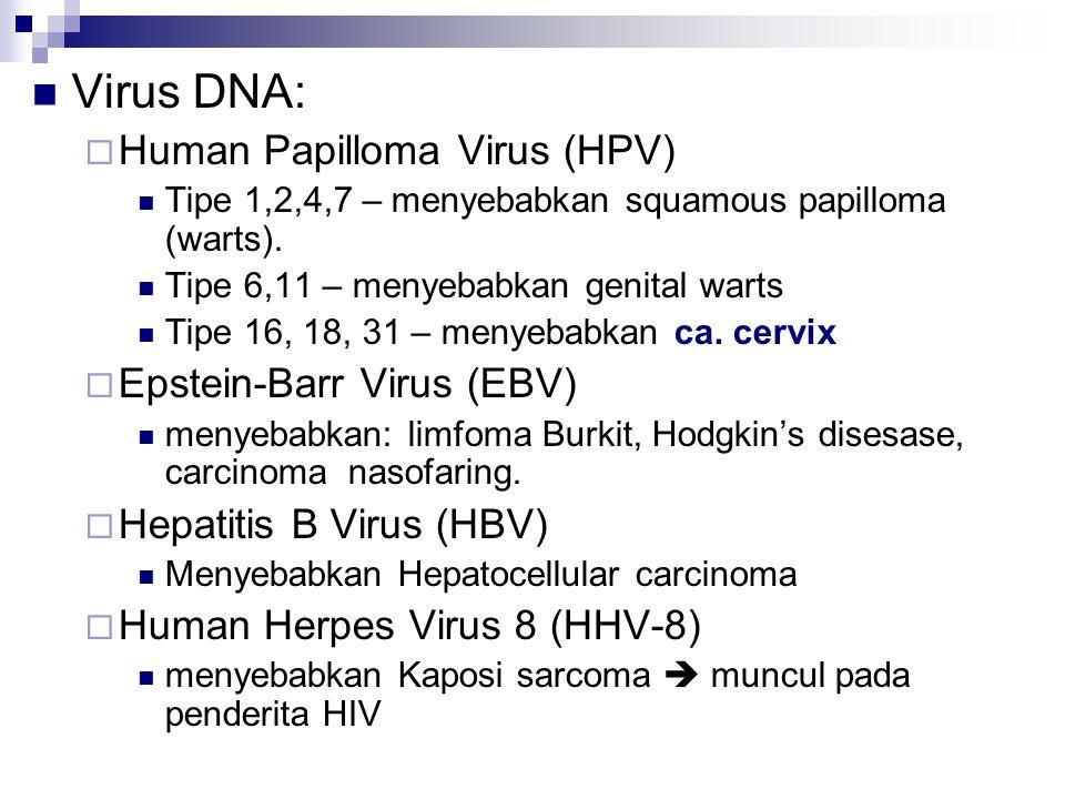 Virus DNA:  Human Papilloma Virus (HPV) Tipe 1,2,4,7 – menyebabkan squamous papilloma (warts). Tipe 6,11 – menyebabkan genital warts Tipe 16, 18, 31