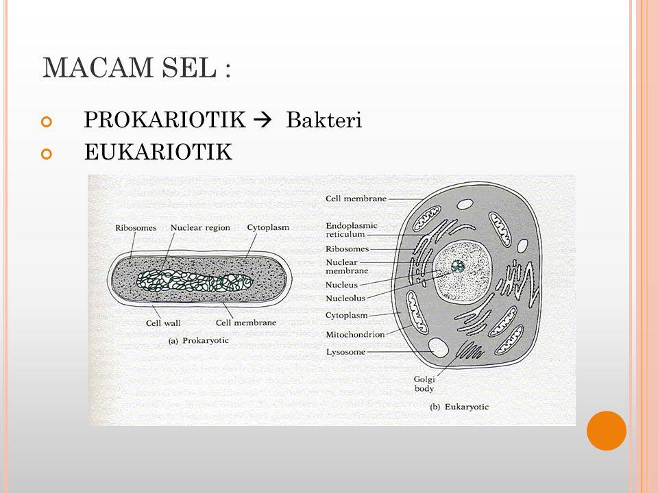 BAGIAN-BAGIAN SEL : MEMBRAN SEL PROTOPLASMA SITOPLASMA INTI SEL (NUKLEUS)
