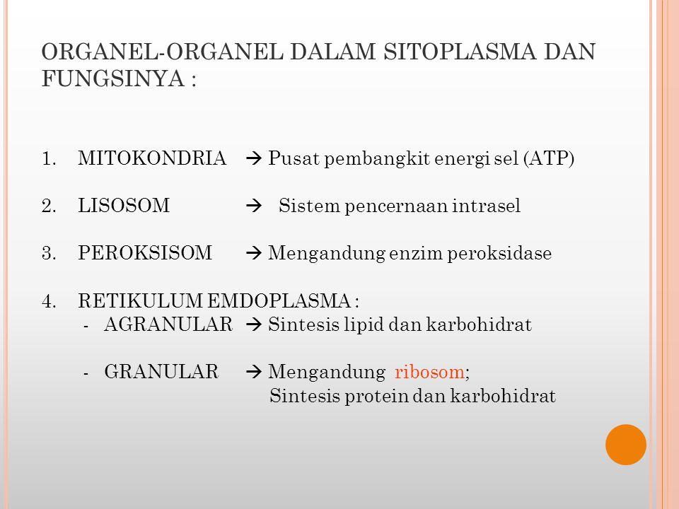 ORGANEL-ORGANEL DALAM SITOPLASMA DAN FUNGSINYA : 1. MITOKONDRIA  Pusat pembangkit energi sel (ATP) 2. LISOSOM  Sistem pencernaan intrasel 3. PEROKSI