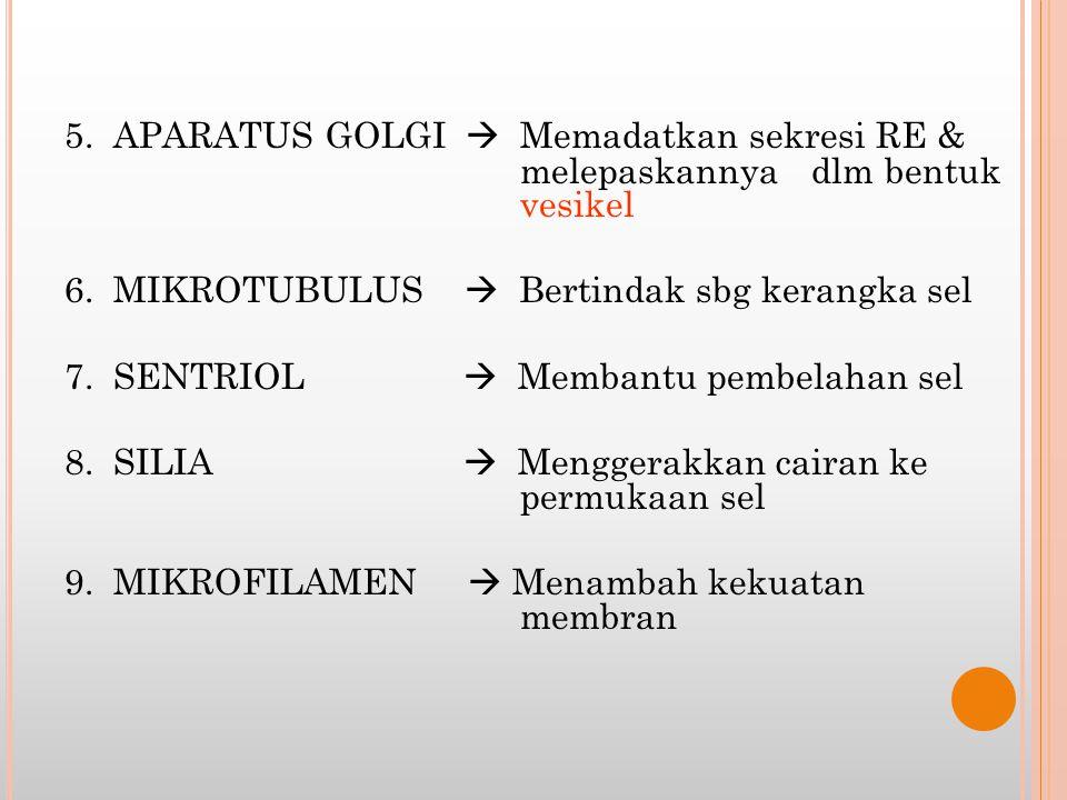 5. APARATUS GOLGI  Memadatkan sekresi RE & melepaskannya dlm bentuk vesikel 6. MIKROTUBULUS  Bertindak sbg kerangka sel 7. SENTRIOL  Membantu pembe