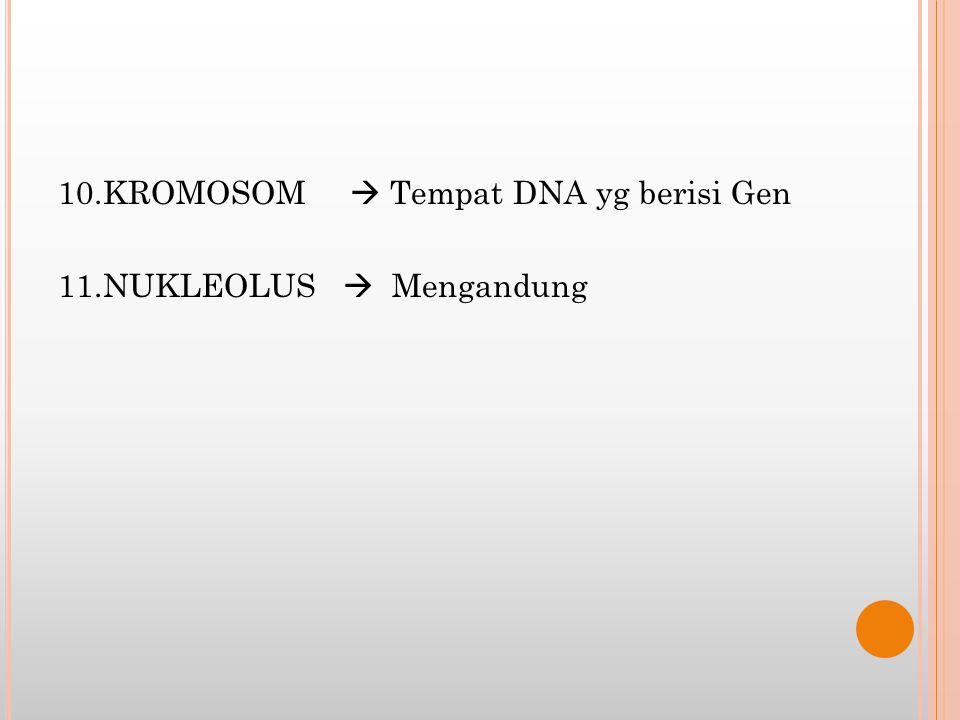 10.KROMOSOM  Tempat DNA yg berisi Gen 11.NUKLEOLUS  Mengandung