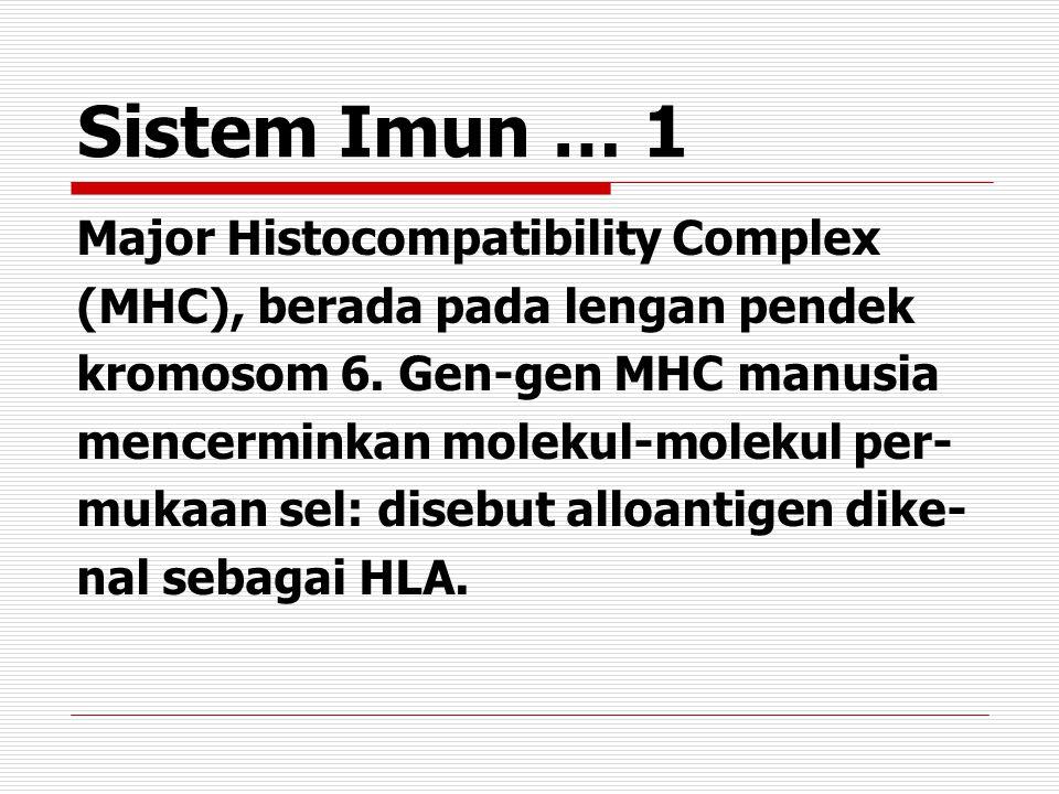 Sistem Imun … 1 Major Histocompatibility Complex (MHC), berada pada lengan pendek kromosom 6.