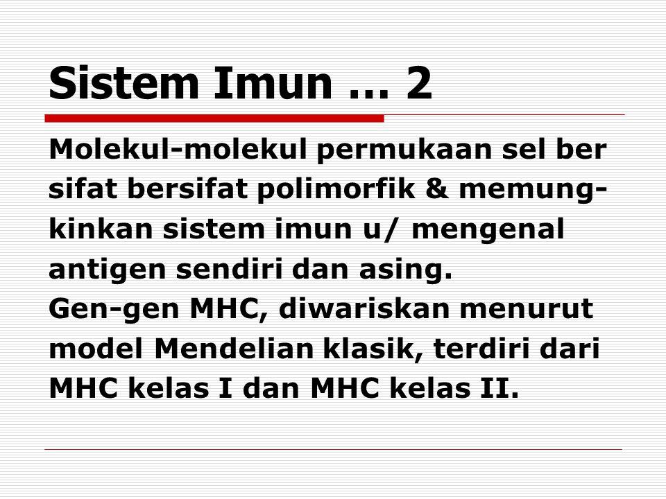 Sistem Imun … 2 Molekul-molekul permukaan sel ber sifat bersifat polimorfik & memung- kinkan sistem imun u/ mengenal antigen sendiri dan asing.