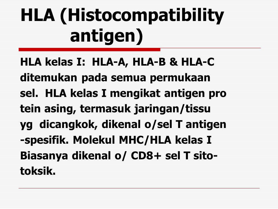 HLA (Histocompatibility antigen) HLA kelas I: HLA-A, HLA-B & HLA-C ditemukan pada semua permukaan sel.