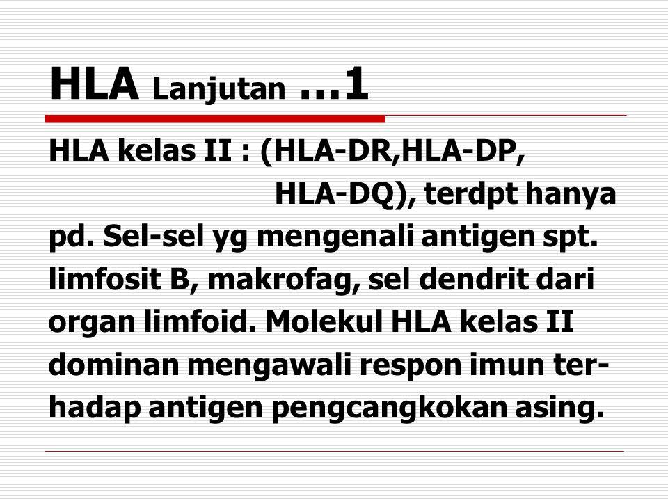HLA Lanjutan …1 HLA kelas II : (HLA-DR,HLA-DP, HLA-DQ), terdpt hanya pd.