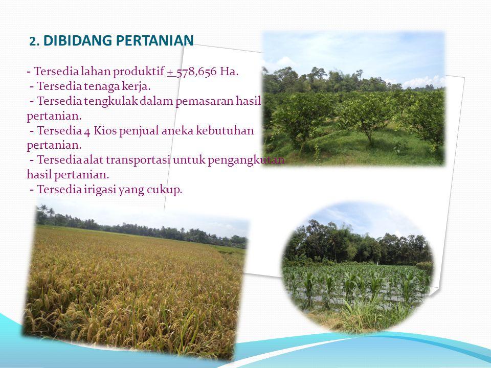 2.DIBIDANG PERTANIAN - Tersedia lahan produktif + 578,656 Ha.