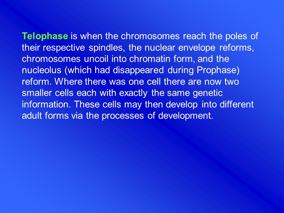 Telophase is when the chromosomes reach the poles of their respective spindles, the nuclear envelope reforms, chromosomes uncoil into chromatin form, and the nucleolus (which had disappeared during Prophase) reform.