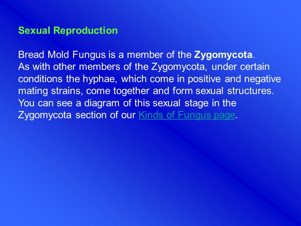 Sexual Reproduction Bread Mold Fungus is a member of the Zygomycota.