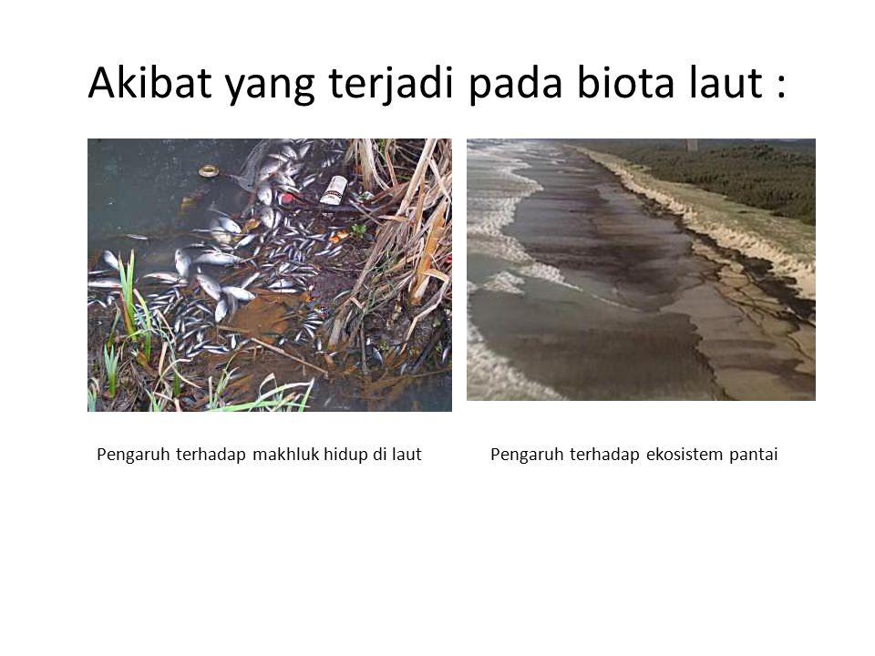 Akibat yang terjadi pada biota laut : Pengaruh terhadap makhluk hidup di lautPengaruh terhadap ekosistem pantai