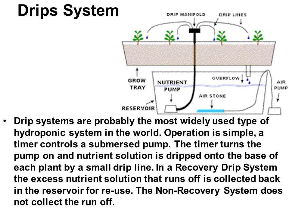 Drips System Drip systems are probably the most widely used type of hydroponic system in the world. Operation is simple, a timer controls a submersed