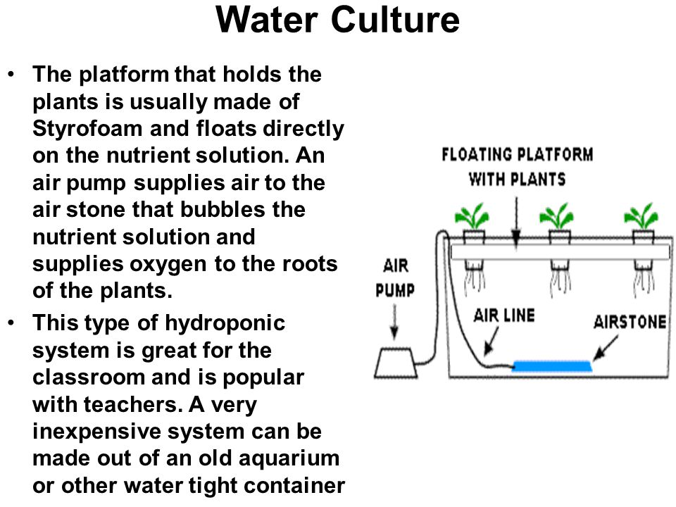 Water Culture The platform that holds the plants is usually made of Styrofoam and floats directly on the nutrient solution. An air pump supplies air t
