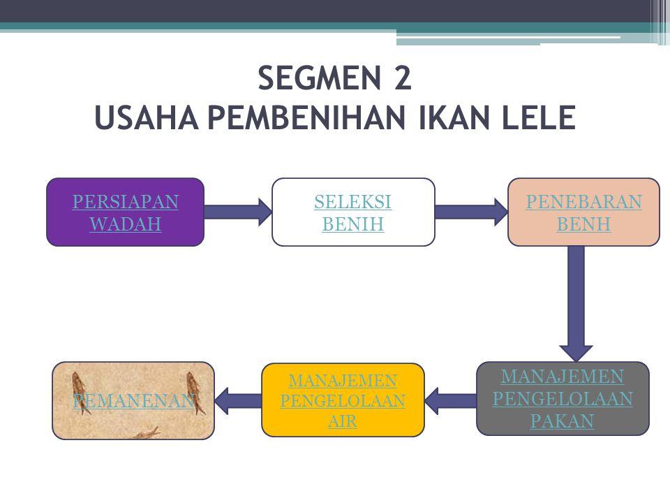 PEMANENAN LARVA Prosedur Pemanenan Benih -Larva umur 3-4 minggu (Uk.