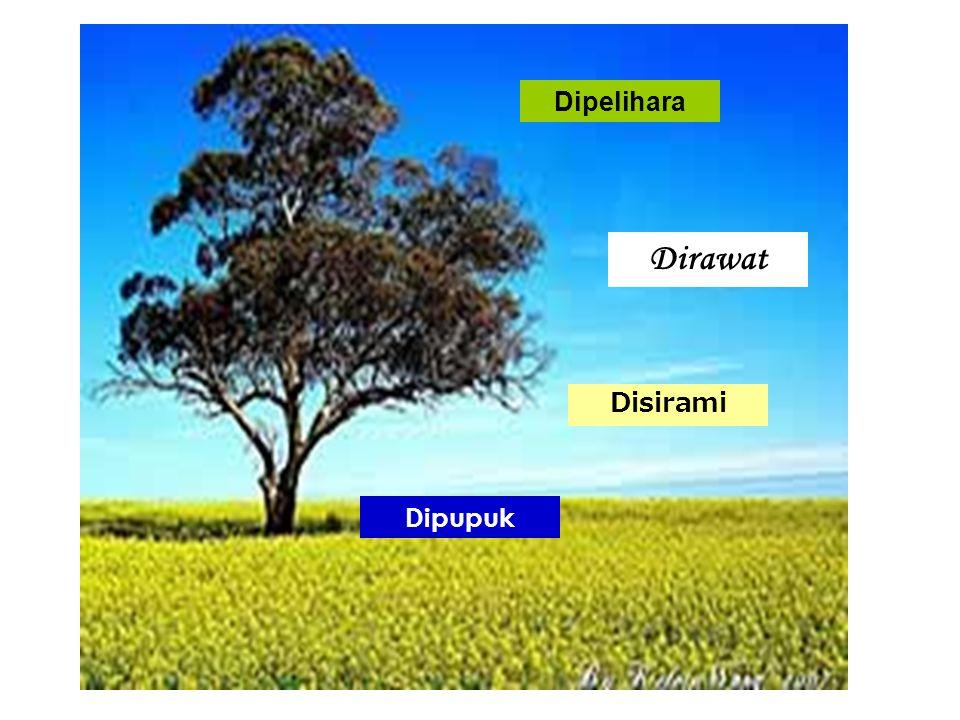 Pohon Iman [Q.S.
