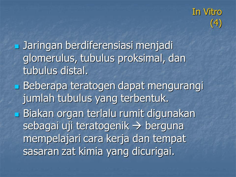 In Vitro (4) Jaringan berdiferensiasi menjadi glomerulus, tubulus proksimal, dan tubulus distal. Jaringan berdiferensiasi menjadi glomerulus, tubulus