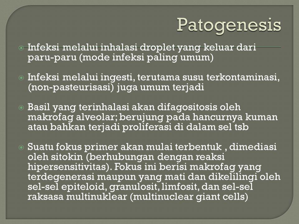  Infeksi melalui inhalasi droplet yang keluar dari paru-paru (mode infeksi paling umum)  Infeksi melalui ingesti, terutama susu terkontaminasi, (non-pasteurisasi) juga umum terjadi  Basil yang terinhalasi akan difagositosis oleh makrofag alveolar; berujung pada hancurnya kuman atau bahkan terjadi proliferasi di dalam sel tsb  Suatu fokus primer akan mulai terbentuk, dimediasi oleh sitokin (berhubungan dengan reaksi hipersensitivitas).