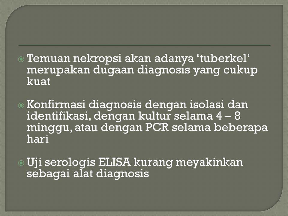  Temuan nekropsi akan adanya 'tuberkel' merupakan dugaan diagnosis yang cukup kuat  Konfirmasi diagnosis dengan isolasi dan identifikasi, dengan kultur selama 4 – 8 minggu, atau dengan PCR selama beberapa hari  Uji serologis ELISA kurang meyakinkan sebagai alat diagnosis