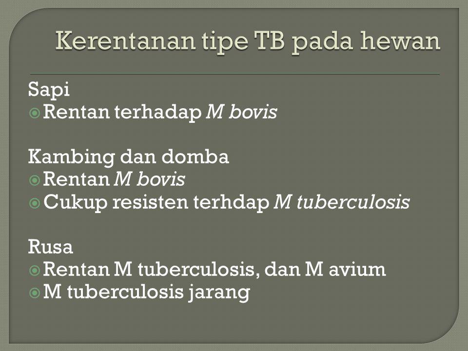 Sapi  Rentan terhadap M bovis Kambing dan domba  Rentan M bovis  Cukup resisten terhdap M tuberculosis Rusa  Rentan M tuberculosis, dan M avium  M tuberculosis jarang