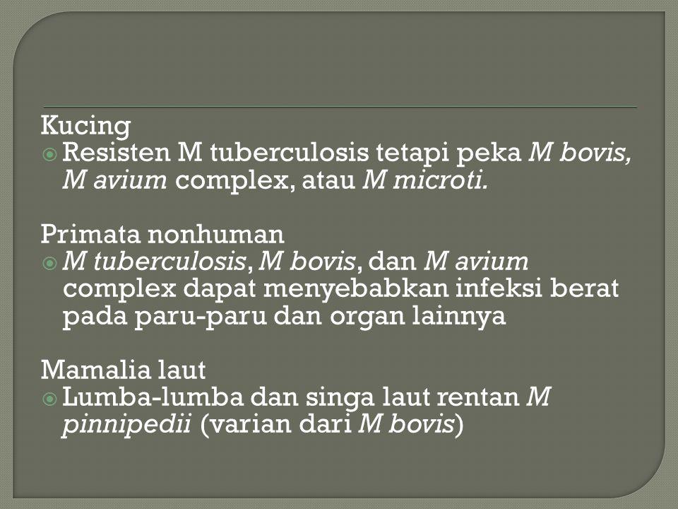 Kucing  Resisten M tuberculosis tetapi peka M bovis, M avium complex, atau M microti.