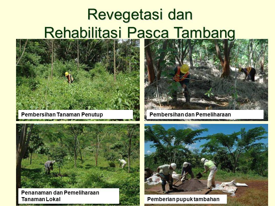 Penanaman dan Pemeliharaan Tanaman Lokal Pemberian pupuk tambahanPembersihan Tanaman PenutupPembersihan dan Pemeliharaan Revegetasi dan Rehabilitasi P
