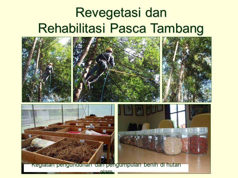 Kegiatan pengunduhan dan pengumpulan benih di hutan alam Revegetasi dan Rehabilitasi Pasca Tambang