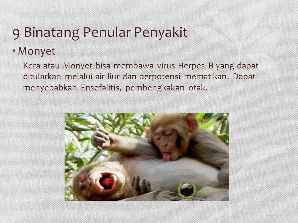 9 Binatang Penular Penyakit Monyet Kera atau Monyet bisa membawa virus Herpes B yang dapat ditularkan melalui air liur dan berpotensi mematikan. Dapat