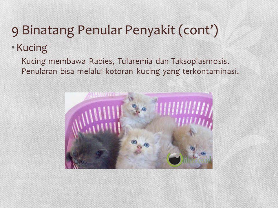9 Binatang Penular Penyakit (cont') Kucing Kucing membawa Rabies, Tularemia dan Taksoplasmosis. Penularan bisa melalui kotoran kucing yang terkontamin